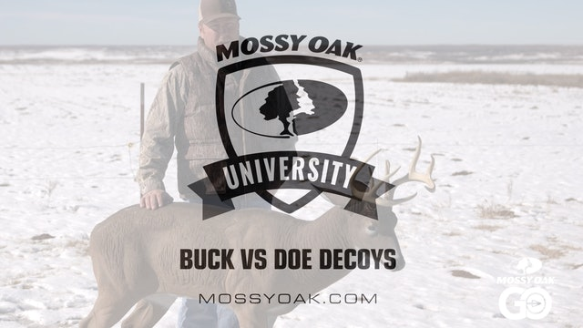 Buck vs Doe Decoy • Mossy Oak University