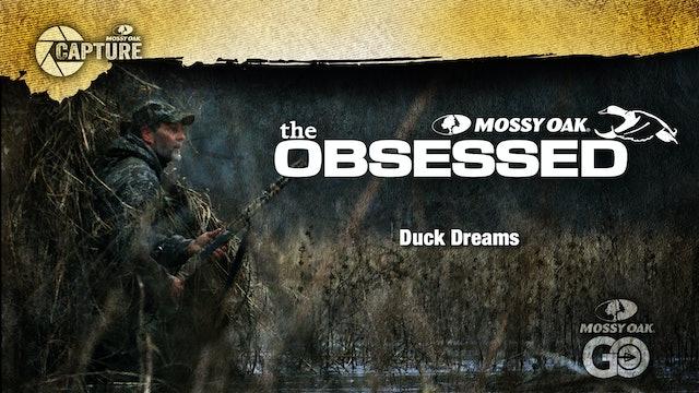 Duck Dreams • Toxey Haas