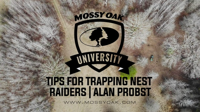 Tips for Trapping Nest Raiders with Alan Probst