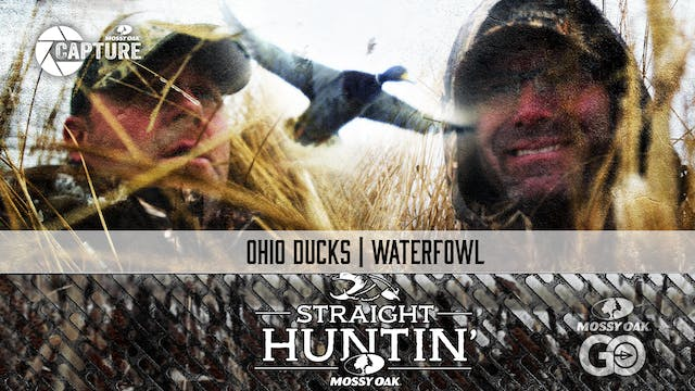 Ohio Ducks • Waterfowl • Straight Hun...