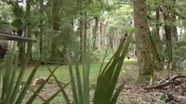 Osceola Ambush