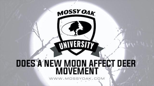 Does a New Moon Affect Deer Movement