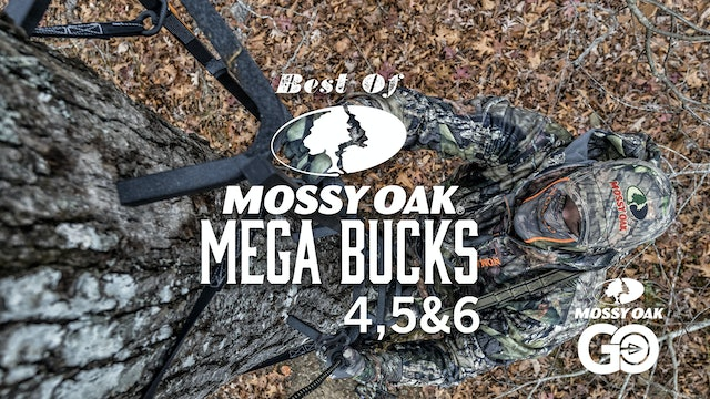 Best of Mega Bucks 456