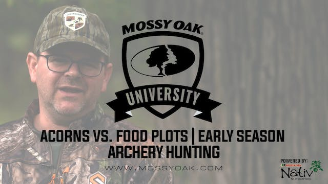 Hunting Food Plots vs. Acorns in Earl...