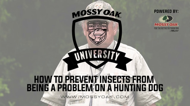 Insect Prevention For Your Dog