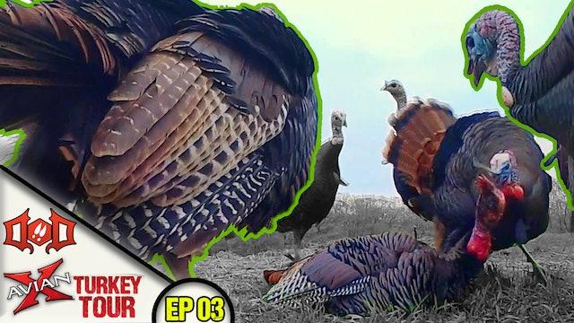 Pecking Order 101, Revenge of the Six Jakes! • Avian X Turkey Tour
