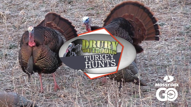 Terry Drury Dials in a Snowy Springtime Gobbler • DOD TV