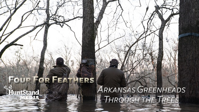 Arkansas Greenheads Through The Trees • Four For Feathers