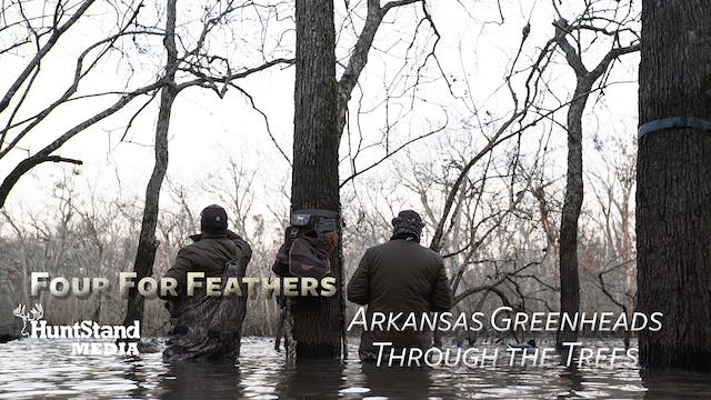 Arkansas Greenheads Through The Trees...