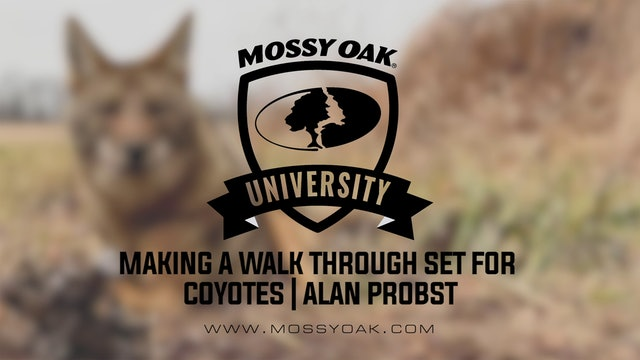 Making A Walk Through Set for Coyotes with Alan Probst
