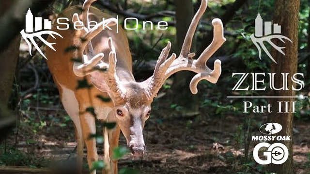 Zeus III • Seek One