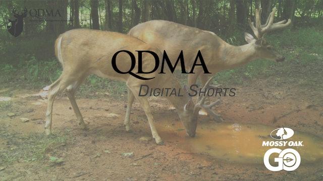 EHD Information • QDMA Shorts