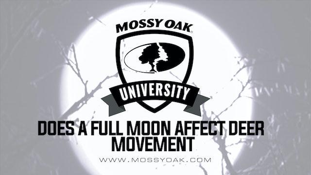 Does a Full Moon Affect Deer Movement