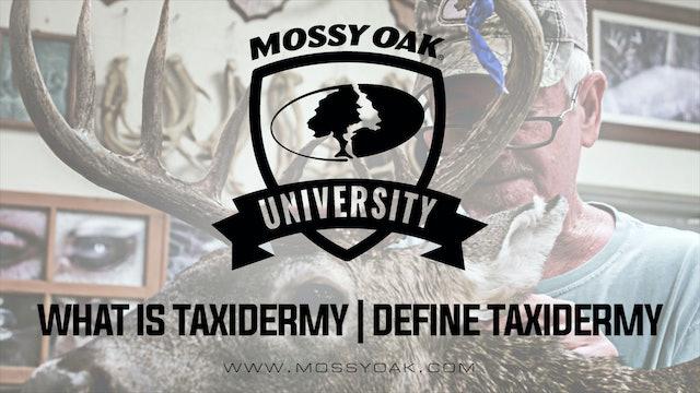 What Is Taxidermy | Define Taxidermy