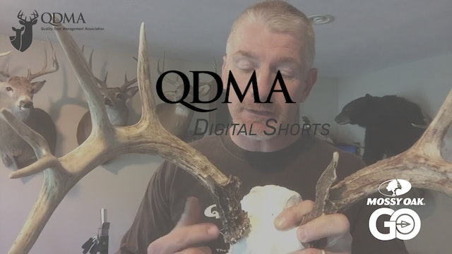Deer Antler Growth and Info • QDMA Shorts