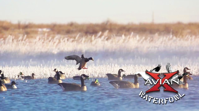 Hottub • Avian X Waterfowl