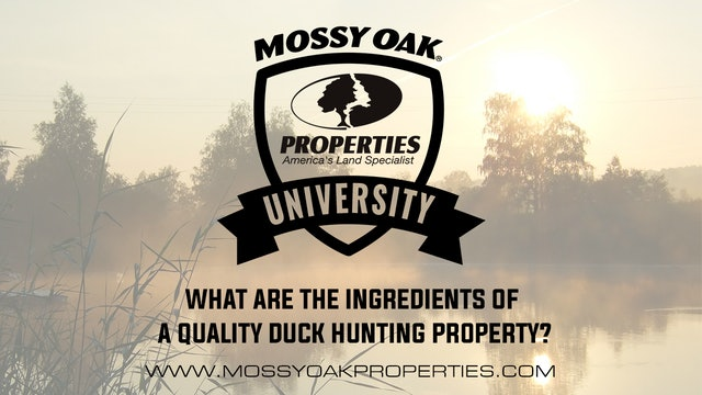 What Are The Ingredients Of A Quality Duck Hunting Property