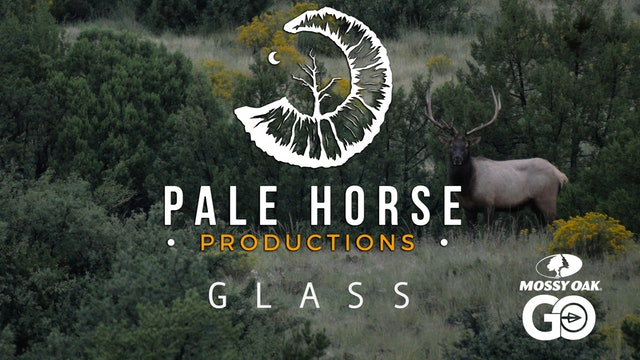 Glass • Pale Horse