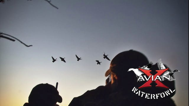 Quebec Snows • Avian X Waterfowl