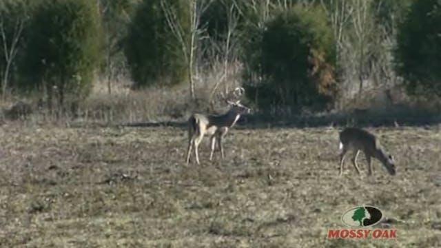 Main Beam Magic • Big Mississippi Bucks