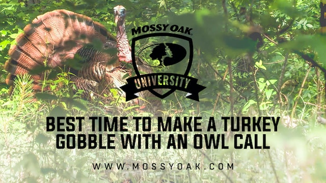 Best Time to Make a Turkey Gobble with an Owl Call