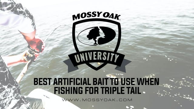 Best Artificial Baits to Use When Fis...