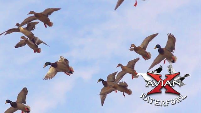 The Bank PTO • Avian X Waterfowl