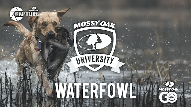 Waterfowl • Mossy Oak University