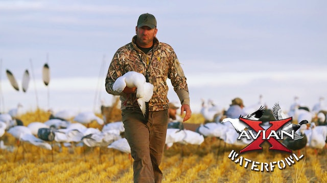 White Goose Adrenaline • Avian X Waterfowl