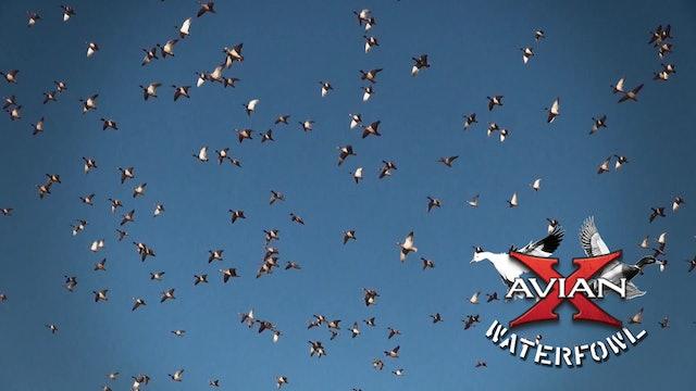 Kansas • Avian X Waterfowl