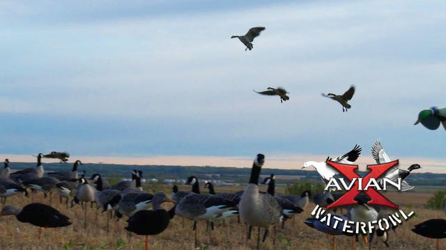Ranchland • Avian X Waterfowl