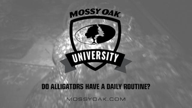 Do Alligators Have a Daily Routine • ...