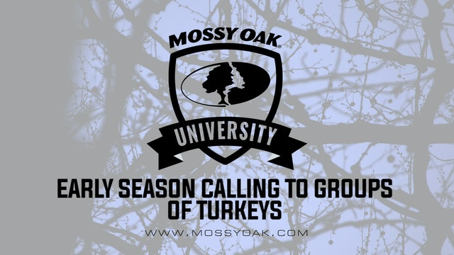 Calling to Groups of Turkeys in the Early Season-