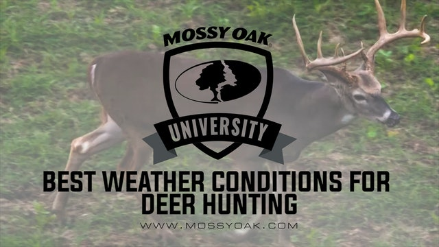 Best Weather Conditions for Deer Hunting