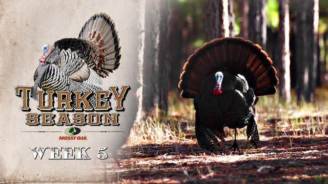 Live: 4.12.2021 Turkey Season