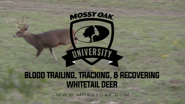Blood Trailing, Tracking, and Recovering a Whitetail Deer