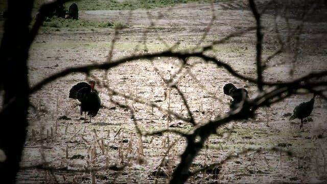 The Last Week • Turkey Hunting in Mai...