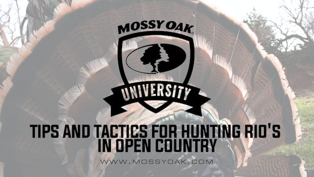 Tips and Tactics For Hunting Rios in Open Country