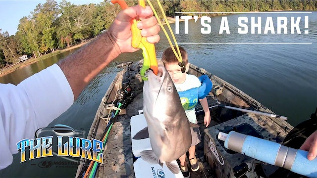 It's a Shark! • The Lure