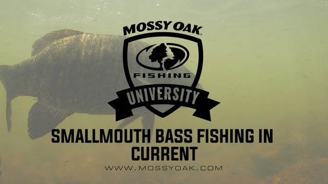Small River Smallmouth Bass • How To ...