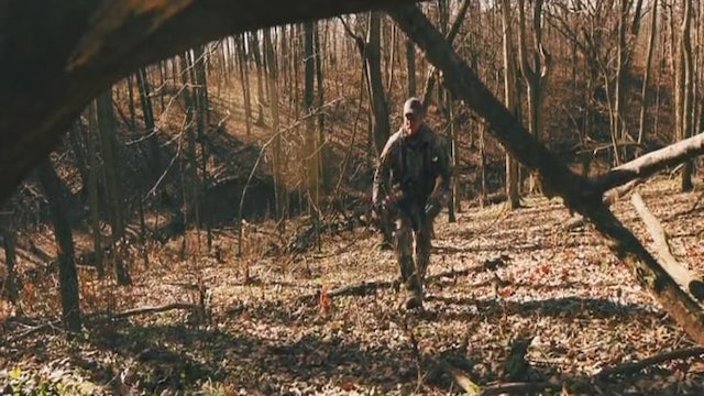 Back to the Beginning • Deer and Hogs in Mississippi