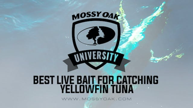 Best Live Bait for Tuna Fishing