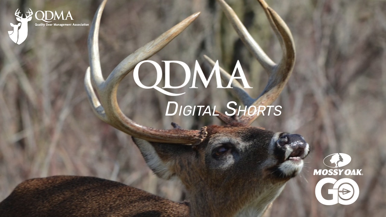 QDMA Digital Shorts