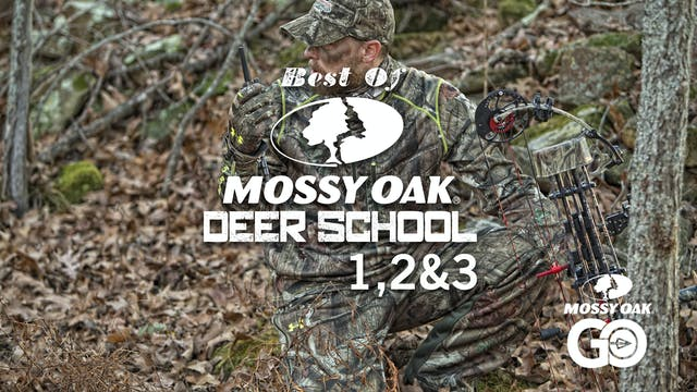 Best of Deer School 123
