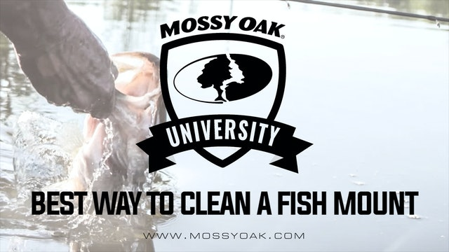 Best Way to Clean a Fish Mount