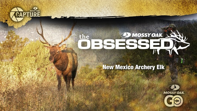 The Obsessed • New Mexico Elk