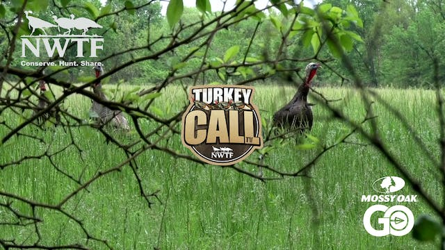 A Turkey Named Toto • NWTF