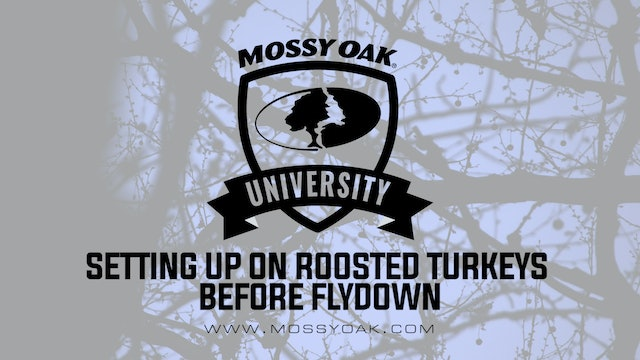 Setting Up on a Roost Before Flydown | Turkey Hunting