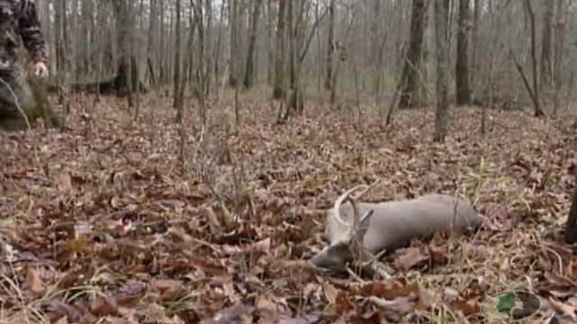 Biologic Bucks