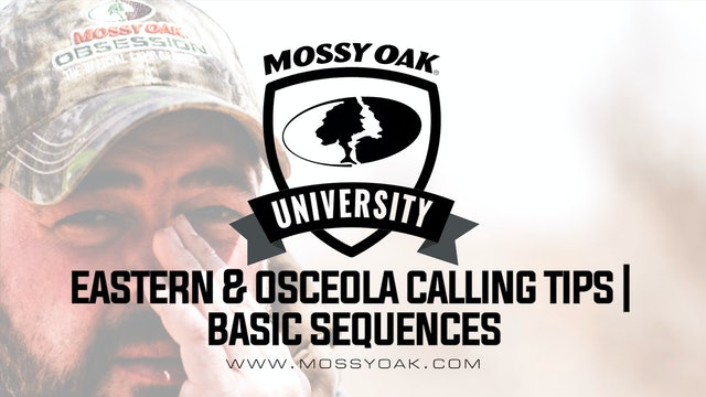Best Eastern and Osceola Wild Turkey Calling Tips • Basic Sequence